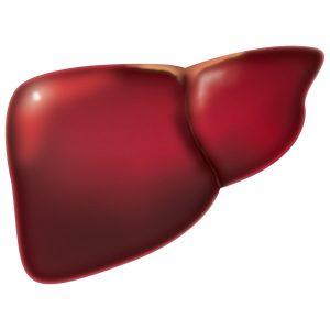 Hígado Graso. Imagen del hígado humano